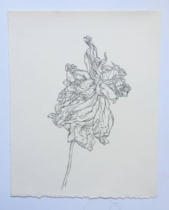 Studio, plant drawing #8, work on paper, graphite, signed