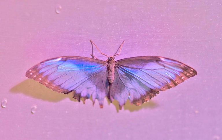 a.muse Color Photograph - Hot-tie, Butterfly Series, Contemporary Color Photo of Still Life, Edition of 10