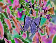 Purple Rain, archival pigment print