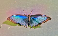 Tame, Butterfly Series, Limited Edition Contemporary Color Photography