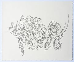 Plant Drawing #1, Studio II, drawing, graphite, signed by Karl Klingbiel
