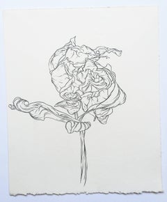 Plant Drawing #216, drawing, graphite, signed by Karl Klingbiel