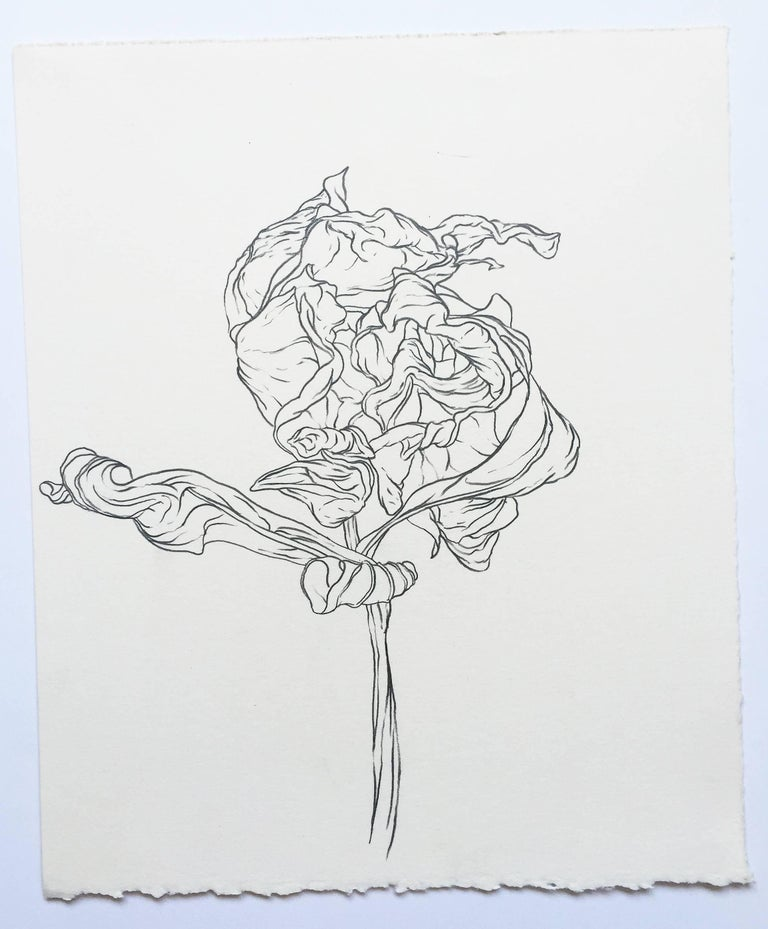 Plant Drawing #216, Original Contemporary Graphite Drawings of Modern  Botanicals