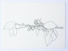Plant Drawing #2, Bermuda, original drawing, graphite, signed by Karl Klingbiel