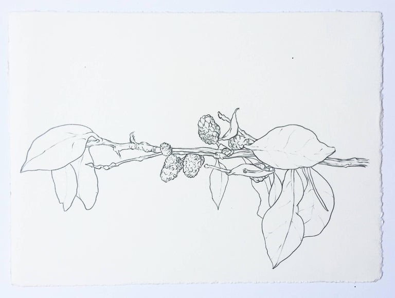 What began in 2010 as a study of the structure of plants and flowers, Karl Klingbiel's plant drawings reveal detail and form in nature. Fascinated with the complexity of plants and rendering them, Karldescribesa rich relationship between the