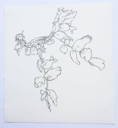 Plant Drawing #1, Studio, work on paper, graphite, signed