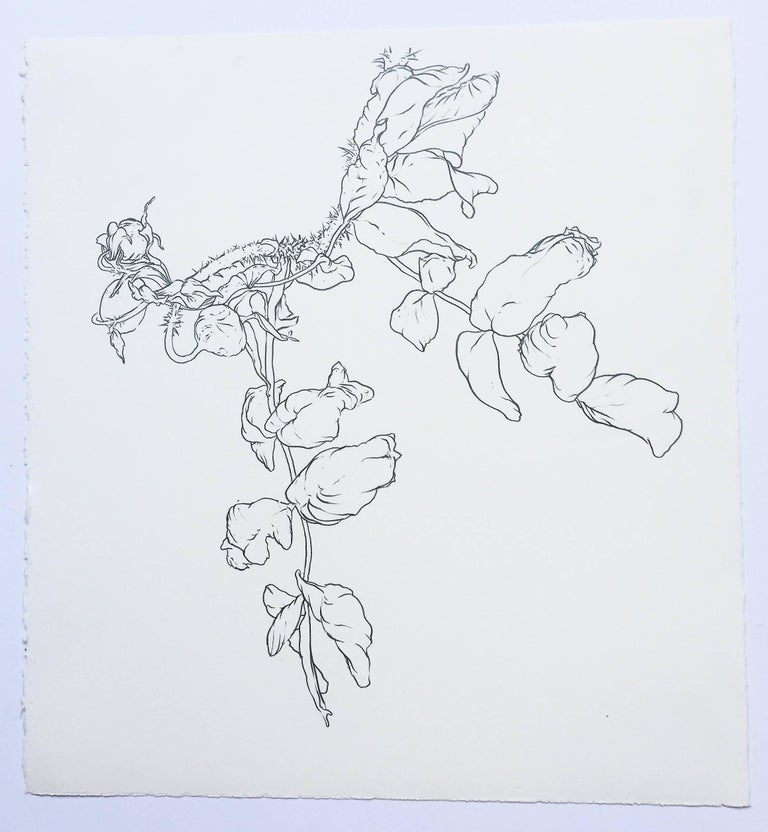 Karl Klingbiel, Plant drawing #1, Studio, 2014 is an original drawing -- graphite on etching paper. It is a study of plant life and is rendered in great detail with a modernist's eye. A piece both antithetical and a respite from the artist's