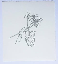 Plant Drawing #1, Original Contemporary Graphite Drawings of Modern Botanicals