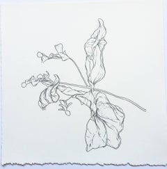 Plant Drawing #2, Original Contemporary Graphite Drawings of Modern Botanicals
