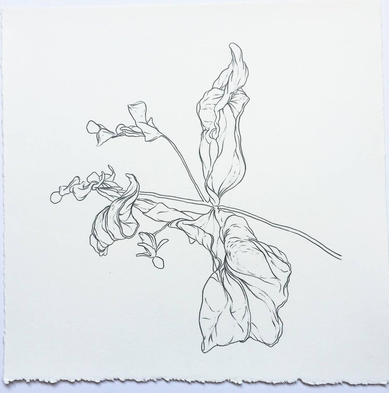 Karl Klingbiel Still-Life - Plant Drawing #2, Original Contemporary Graphite Drawings of Modern Botanicals