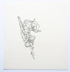 Plant Drawing #3, Untitled, original drawing, graphite, signed by Karl Klingbiel