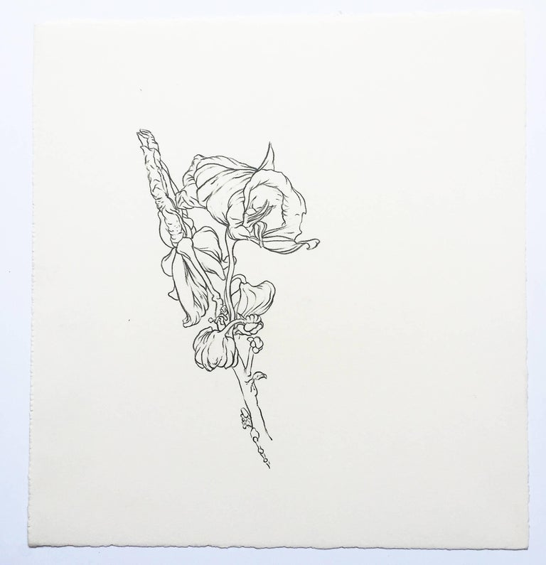 Karl Klingbiel Still-Life - Plant Drawing #3, Original Contemporary Graphite Drawings of Modern Botanicals