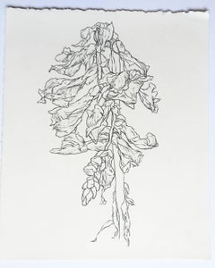 Plant drawing #4, Studio, original drawing, graphite, signed by Karl Klingbiel