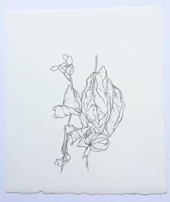 Plant Drawing #5, Original Contemporary Graphite Drawings of Modern Botanicals