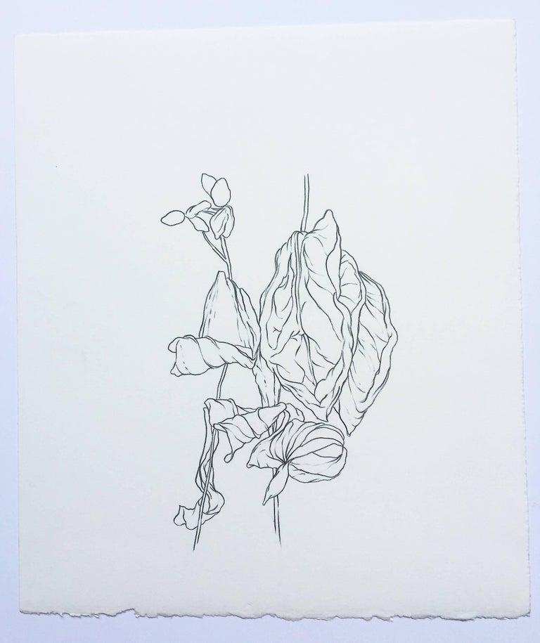 Plant Drawing #5, San Francisco