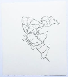 Plant Drawing #6, Original Contemporary Graphite Drawings of Modern Botanicals