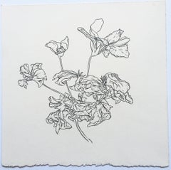 Plant Drawing #7, CT, original drawing, graphite, signed by Karl Klingbiel