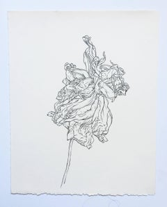 Plant Drawing #8,  Studio, work on paper, graphite, signed