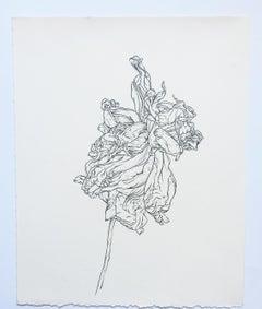 Plant Drawing #8,  Studio, original drawing, graphite by Karl Klingbiel