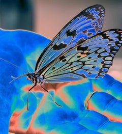 Blue Butterfly, Limited Edition Contemporary Color Photography by Woman Artist