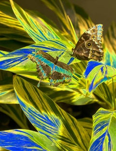 Stay, Butterfly Series, Limited Edition Contemporary Color Nature Photography