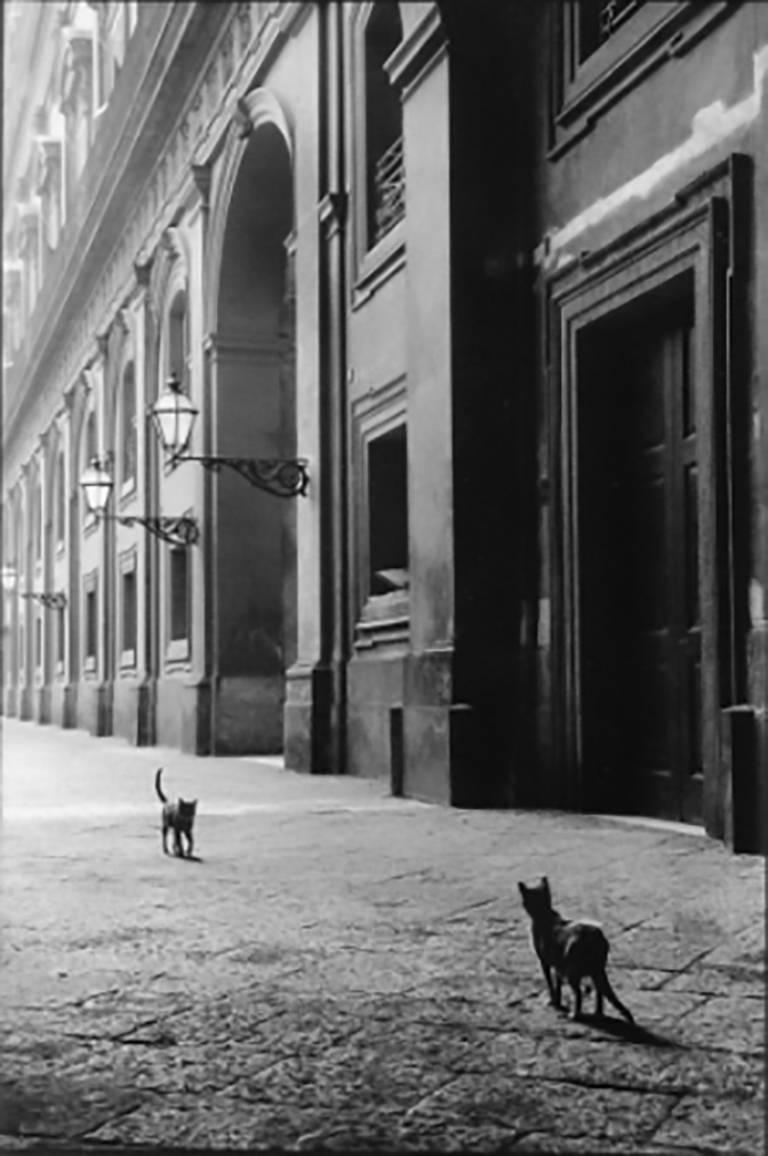 Cats, Naples, Italy, Black and White Street Photography 1950s, Limited Edition