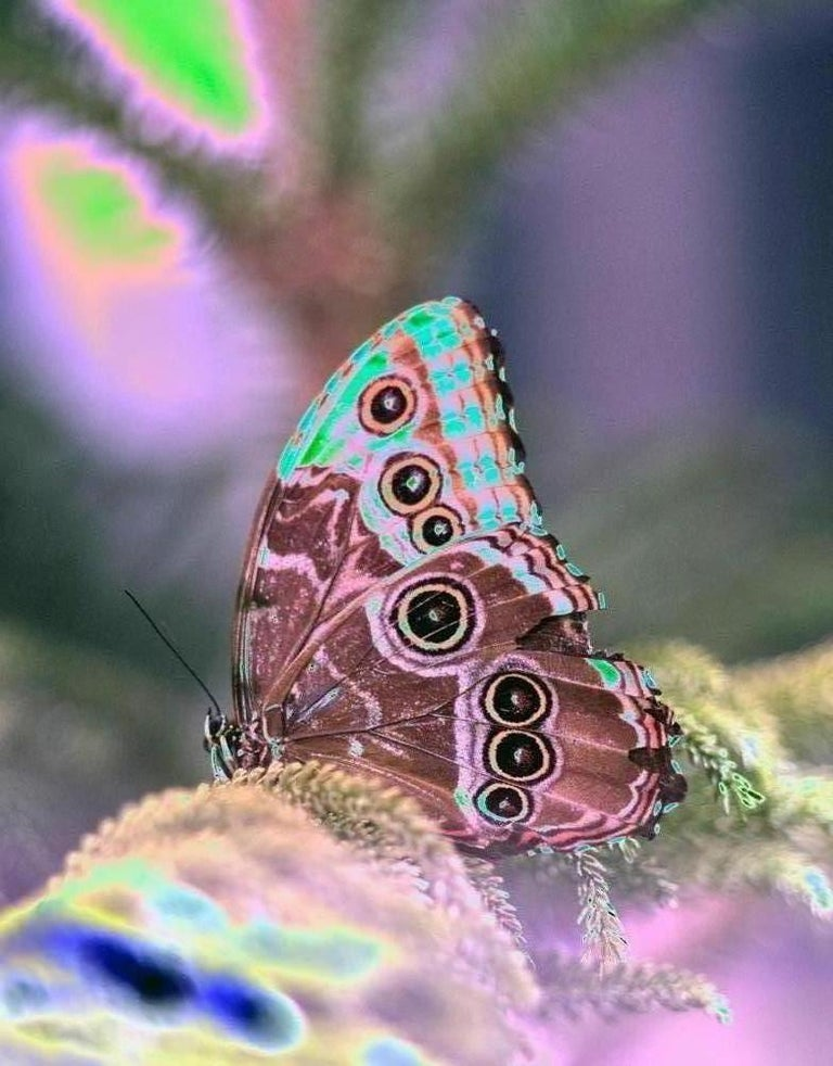 A contemporary color photograph, a still-life photograph of a neon pink butterfly is an exploration into the natural and man-made world. A caterpillar breaks free of its skin for a metamorphosis - it hatches into an exquisite colorful creature, a
