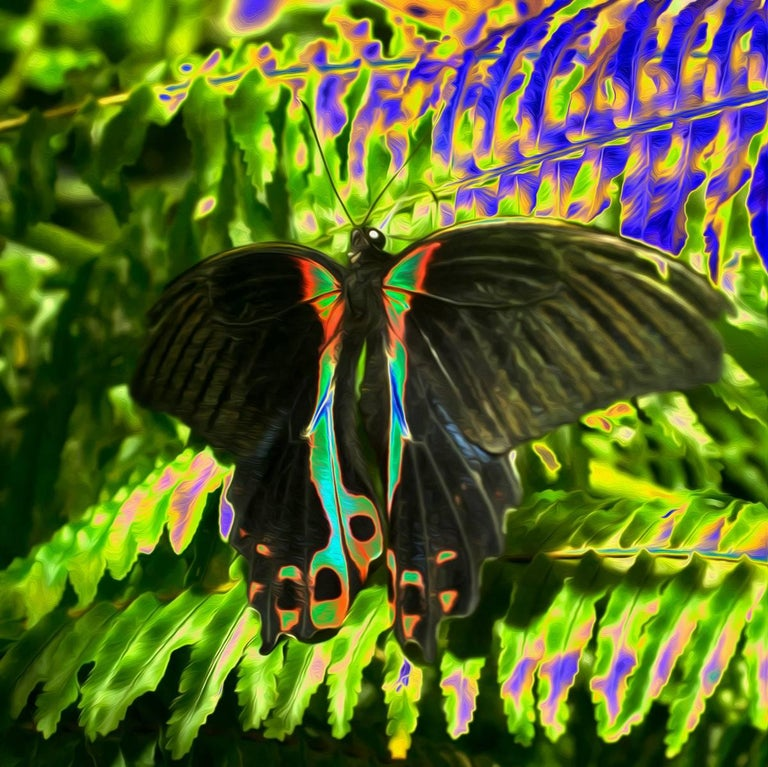 A contemporary color photograph by a.muse, a still-life photograph of a butterfly is an exploration into the natural and man-made world. A caterpillar breaks free of its skin for a metamorphosis - it hatches into an exquisite creature, a vibrant