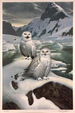 Two Snowy Owls