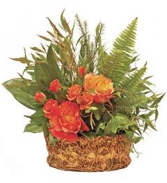 Marsh Marigold Jardiniere (Fern Planter)