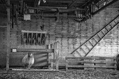 Farm Haiku, Shelburne Farms, Vermont