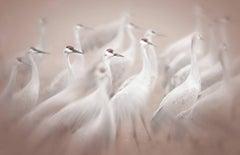 Gliding Cranes