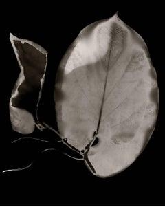 Botanique VI