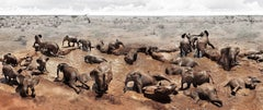 Circle of Life I, Kenya, Elephant, wildlife