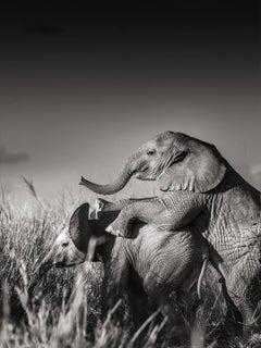 Wild elephant babies playing II