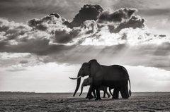 Elephant group in Amboseli Kenya
