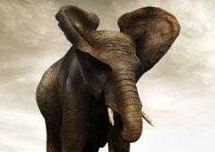 Golden Giant I, 21st century, contemporary, wildlife, Fine Art Print