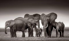 Elephant family in Amboseli, 21st century, contemporary, wildlife