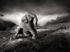 Wonderful morning, 21st century, contemporary, wildlife