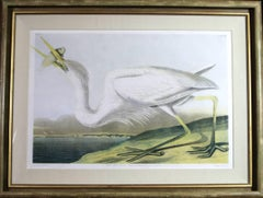 Great White Heron 1860 Audubon Bien Edition Original Chromolithograph