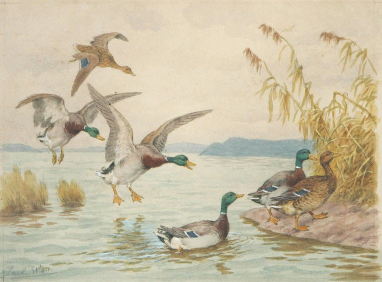 Arrival is an original watercolor showing four Mallard drakes and two hens as they are making a landing on a lake and climbing up the bank. The American artist Paul Wood ( 1897-1964 ) was known for his watercolors and etchings of animals but