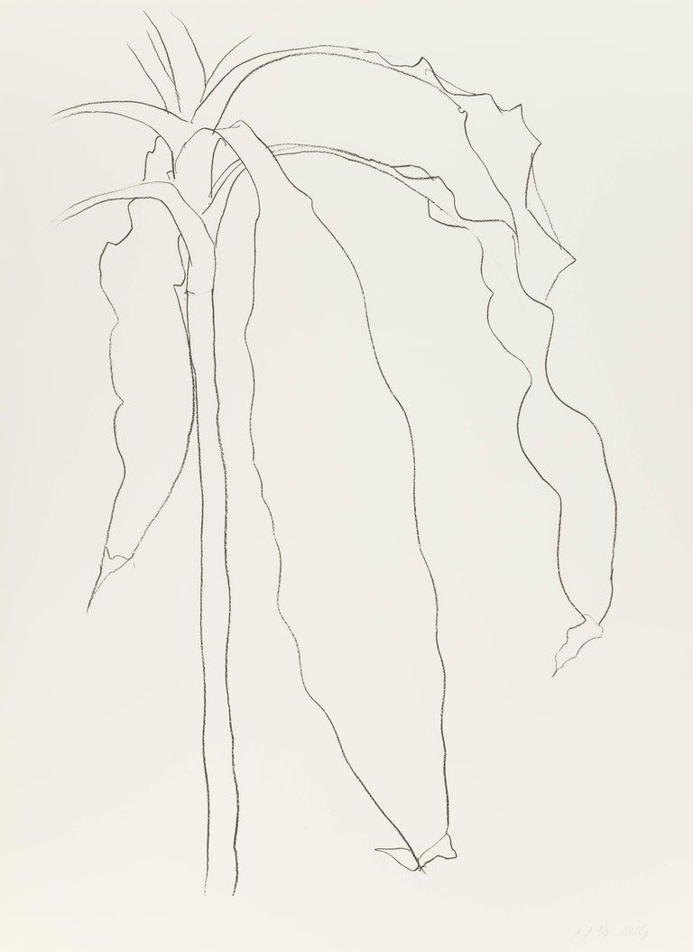 Ellsworth Kelly Still-Life Print - Dracena I