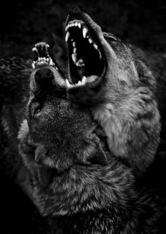 Untitled 16, Shadow Within, Norway/USA - (Animal Photography, Wolf)