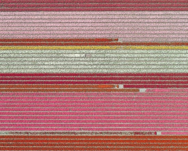 Bernhard Lang Landscape Photograph - Tulip Fields 05 (Netherlands), Aerial abstract photography