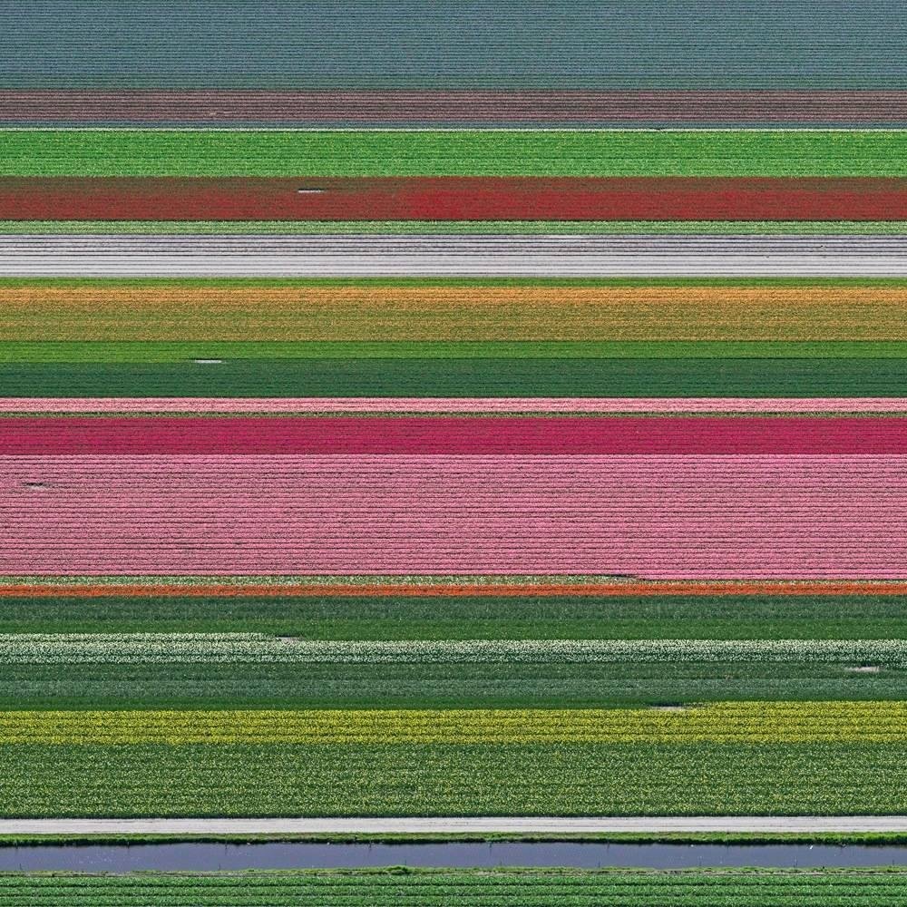 Tulip Fields 14 (Netherlands), Aerial abstract photography