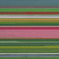 Aerial Views, Tulip Fields 14