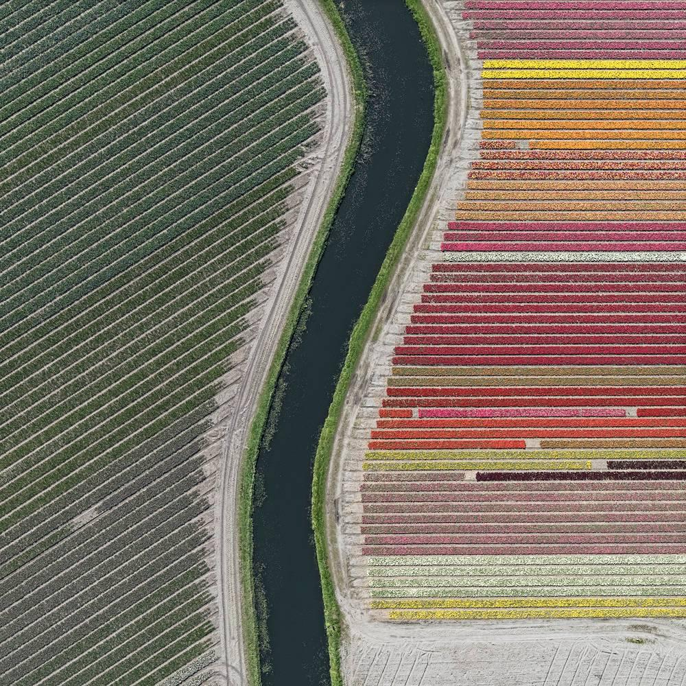Tulip Fields 27 (Netherlands) by Bernhard Lang - Aerial abstract photography