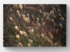 Weeds 6