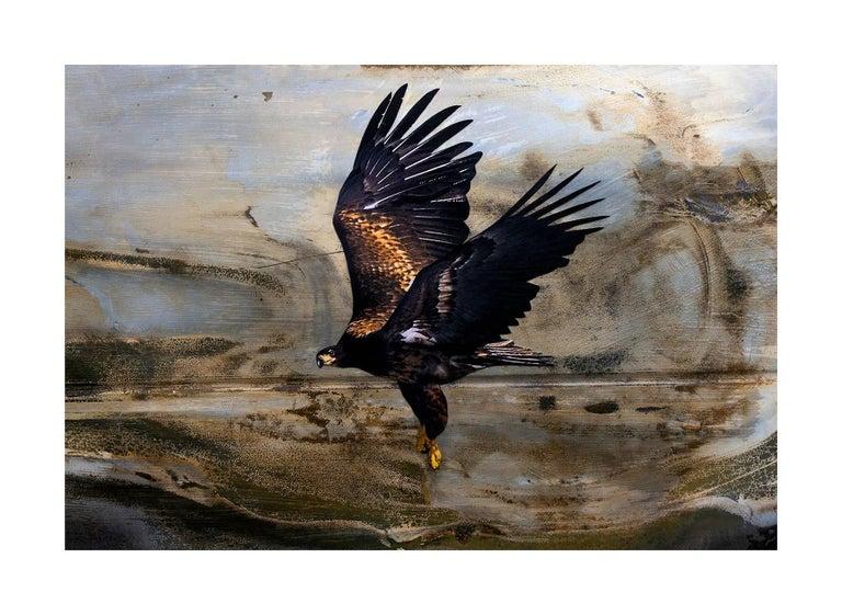 Bird #98 (Aquila Audax)