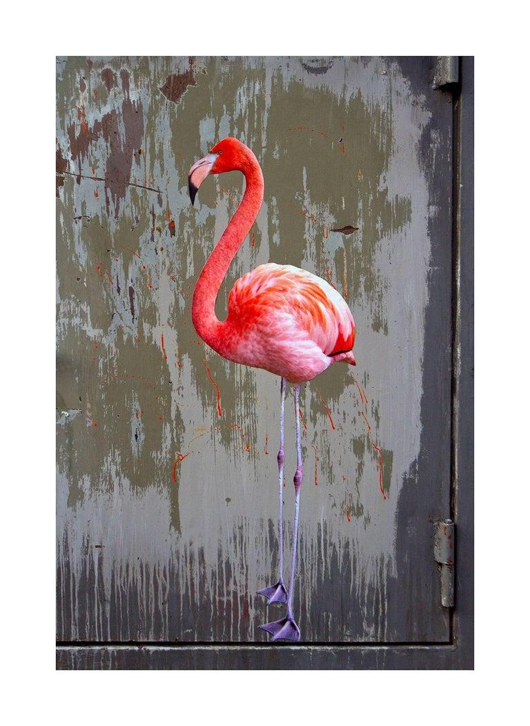 Bird #100 (Phoenicopterus Ruber)